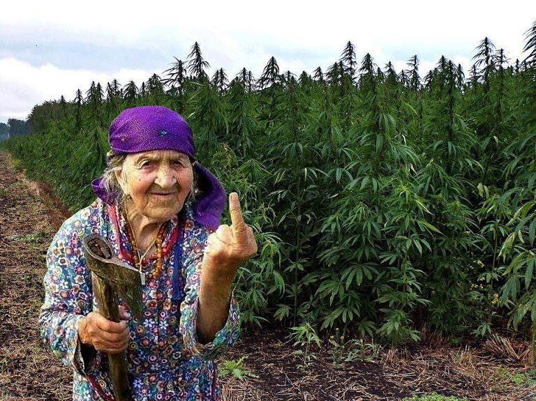 Конопля приколы картинки дедушка пробует марихуану